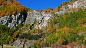 Waterfall flowing in idyllic uncontaminated environment crossing colorful pine and larch tree woodland, autumn colors on the Alps. stock video