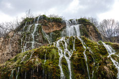 Waterfall Flowing Inside Plants Stock Photos