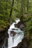 Waterfall in forest. Picture of a tranquil waterfall in Glacier National Park, Montana stock photography