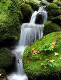Waterfall in the forest. Beautiful waterfall between rocks covered by moss Royalty Free Stock Photos
