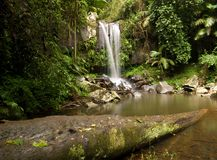 Waterfall in the Forest Stock Photography