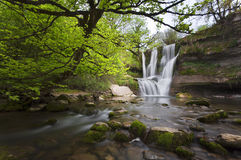 Waterfall in forest. Surrounded by trees Royalty Free Stock Images