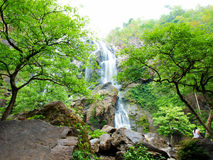 Waterfall in the forest.  Stock Images