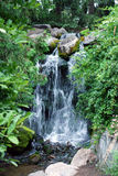 Waterfall in forest. Scenic view of picturesque waterfall in green forest or wood Stock Photos