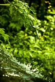 Waterfall in forest. Close up of waterfall in forest with green nature background Stock Images