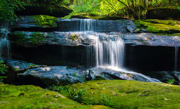 Waterfall in the forest with abundance. Royalty Free Stock Photo