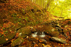 Waterfall in the forest autumn Royalty Free Stock Images