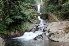 Waterfall in a forest Bali Royalty Free Stock Photo