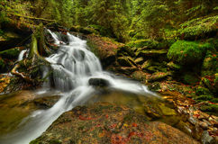 Waterfall in the forest. Waterfall on a creek in the middle of a wild wilderness Stock Image