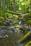 Waterfall in forest creek Olympic National Forest Washington state Stock Photo