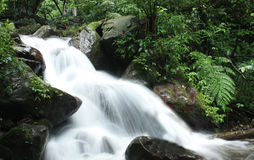 Waterfall in the Forest. Image of peaceful waterfall in the rain forest Stock Photos
