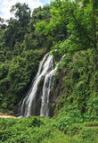 Waterfall in forest. With many green trees Royalty Free Stock Photography