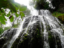 Waterfall in the forest. Royalty Free Stock Image