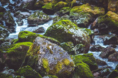 Waterfall in the forest. With moss stones Stock Image