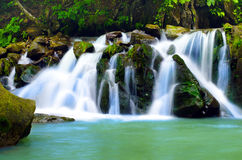 Waterfall, forest Royalty Free Stock Photo