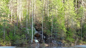 Waterfall in the forest. panorama. Video stock video