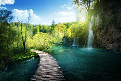Waterfall in forest,  Plitvice Royalty Free Stock Photography