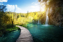 Waterfall in forest,  Plitvice Royalty Free Stock Images