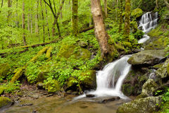 Waterfall in forest. Royalty Free Stock Photos