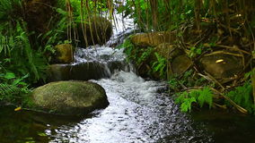 Waterfall in the forest. Small tropical waterfall in the forest surrounded by rocks and green plants stock video