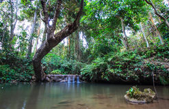 Waterfall and Forest. Stone and big tree in waterfall Stock Images