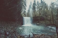 Waterfall in forest of tall fir trees Stock Image