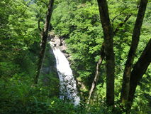 Waterfall in a forest. In Tohoku, Japan Royalty Free Stock Photography