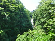 Waterfall in a forest. In Tohoku, Japan Royalty Free Stock Images