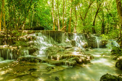 Waterfall in forest with tree Stock Image