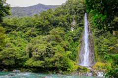 Waterfall in the forest in Westland National Park, New Zealand. Waterfall in Fox Glacier in Westland National Park on the West Coast of New Zealand's South Stock Photos