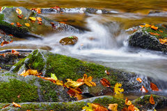 Waterfall in the forest with yellow leaves. Beautiful waterfall in the forest with yellow leaves on the rocks Stock Photography
