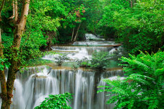 Waterfall in fresh green forest Stock Photo