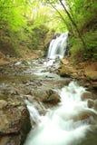 Waterfall of fresh green Stock Image