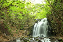 Waterfall of fresh green Royalty Free Stock Photos