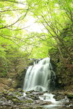 Waterfall of fresh green Stock Images