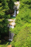 Waterfall of fresh green Stock Photos