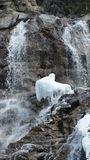Waterfall with frozen water. Waterfall close-up with running water and frozen ice Royalty Free Stock Image