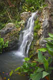 Waterfall in garden. Botanicl Garden in Singapore royalty free stock images
