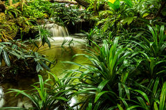 Waterfall in garden Stock Image