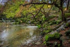 Waterfall garden Stock Photo