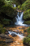 Waterfall in golden stream Stock Photography