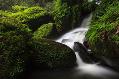 Waterfall with green grass Royalty Free Stock Image