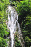 Waterfall and green leaves. In the forest Royalty Free Stock Photography