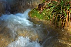 Waterfall and green leaves. Lazarevskoe, Sochi, Russia Royalty Free Stock Photo