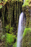 Waterfall and green moss. In the forest Royalty Free Stock Photo