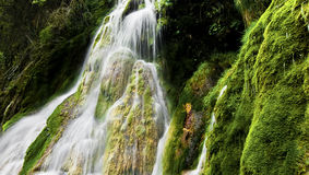 Waterfall and Green Moss Stock Photography