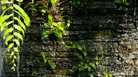 Waterfall with green plants decoration at front for backdrop. Water falling on granite wall, fountain in garden, nature background stock footage