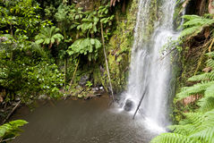 Waterfall in a green rainforest. Australia Stock Photos