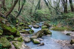 Waterfall in the green ravine stock images