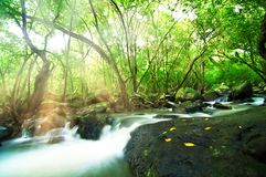 Waterfall in Green Tropical Forest, Thailand Stock Images